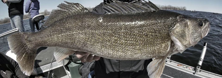 Fishing Guide Green Bay WI Walleye
